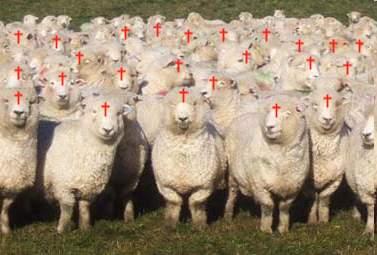christian sheep1 - El Pastoreo religioso del corral humano