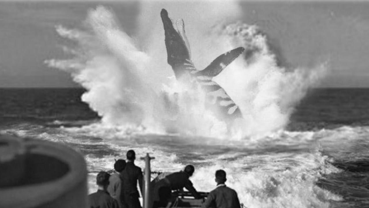 Un auténtico monstruo marino, el gigante U-28