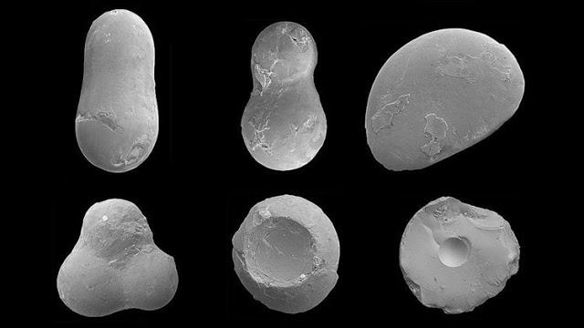 Encuentran en Colombia restos del meteorito que hizo desaparecer a los dinosaurios