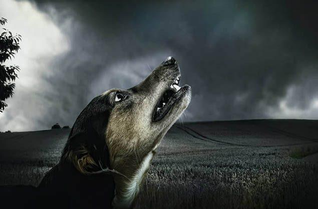 La capacidad de ciertos animales para percibir la muerte