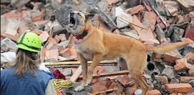 ¿Pueden los animales predecir los terremotos? Científicos dicen que si
