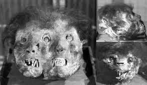 El Hombre Lobo, Es Una MaldicióN? O Simplemente Una MutacióN GenéTica?