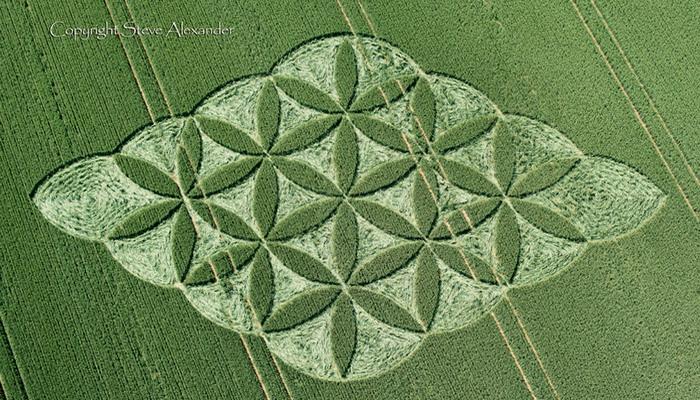 Nuevo Crop Circle en Reino Unido, La Flor de la Vida
