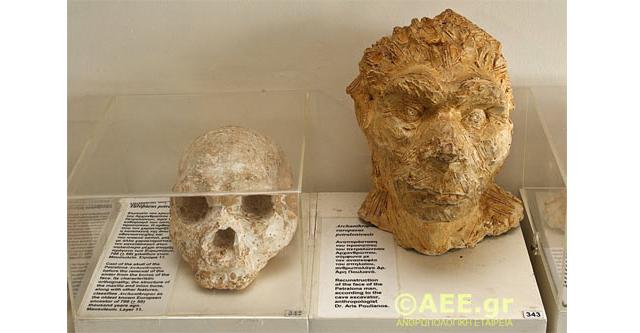"""Un cráneo de 700.000 años de antigüedad descubierto en Grecia desafía la teoría de la Evolución """"Out-of-Africa"""""""