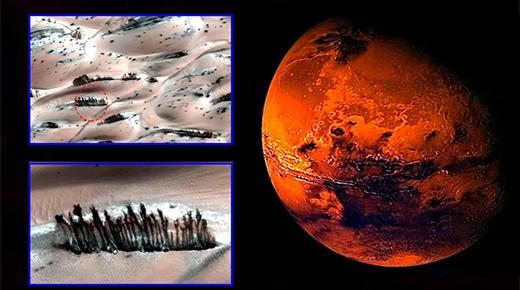 Árboles creciendo en la superficie de Marte revelan masivo encubrimiento de la NASA