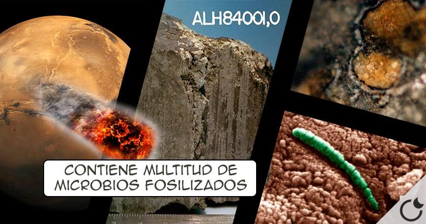 El meteorito ALH84001: LA EVIDENCIA DEFINITIVA DE VIDA EN MARTE silenciada