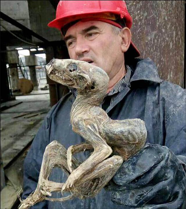 Mineros hallan la momia de un «monstruo bebé» en Siberia