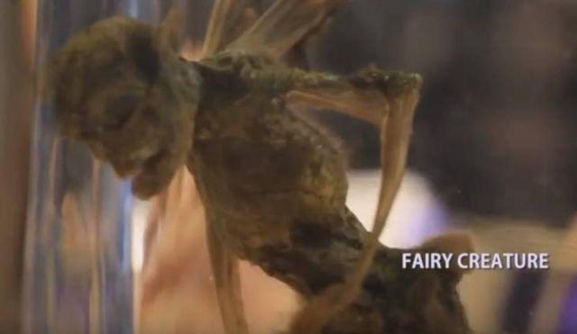 Descubierta la primera verdadera hada: ¡Pequeño humanoide con alas se descubre y biólogo dice que no es un fraude!