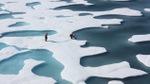 Deshielo inminente: misterioso fenómeno de la 'nieve oscura' amenaza los glaciares del mundo