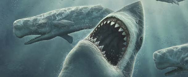 Enorme criatura misteriosa devora un gran tiburón blanco en las costas de Australia