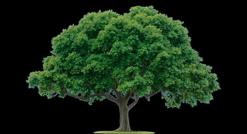 Comprobado científ.: Los árboles SE COMUNICAN ENTRE ELLOS y con OTROS seres vivos