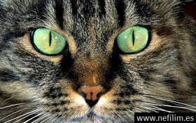 Tu gato te está volviendo loco, esparciendo parásitos que controlan tu mente..!