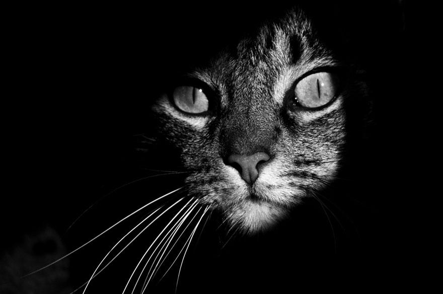 Animales con Poderes Sobrenaturales