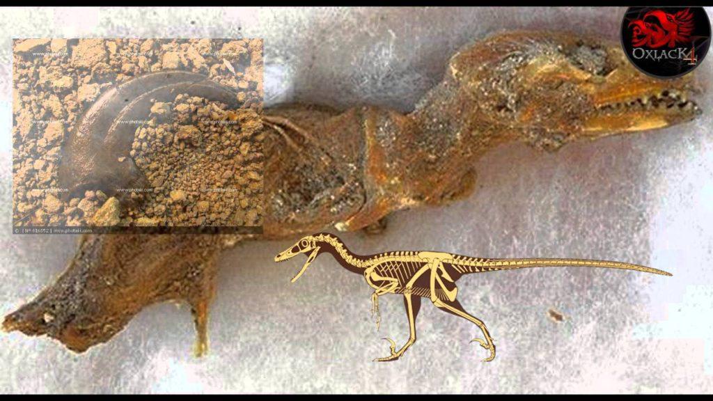 """La Verdad Del Descubrimiento Del """"Feto De Un Velociraptor"""" Encontrado En Perú"""