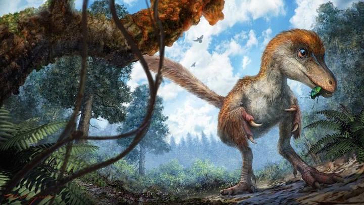 Los Dinosaurios y la Gravedad