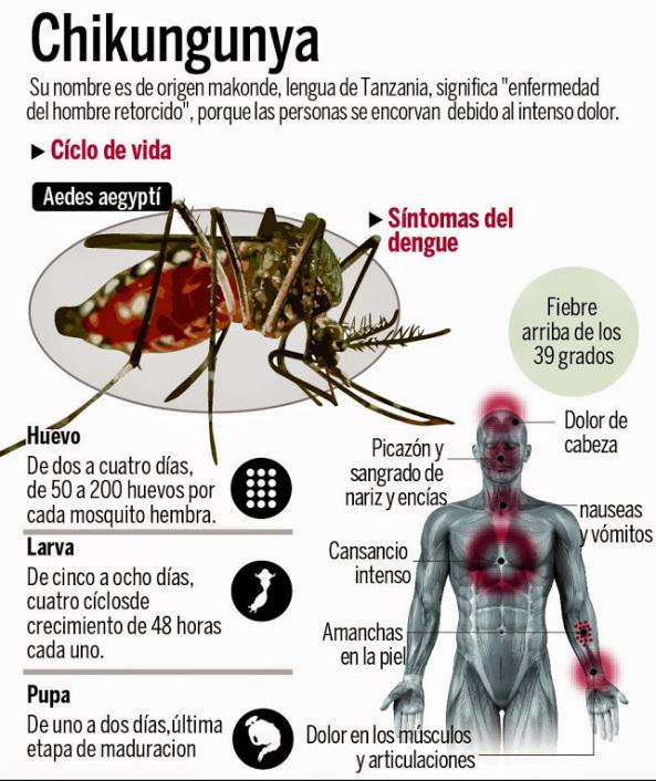 ¿Por qué aparecen tantas epidemias por todo el mundo?