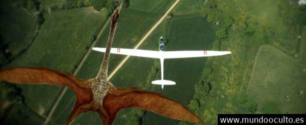 """""""Las Evidencias de que los #Pterosaurios consiguieron sobrevivir hasta nuestros días"""""""