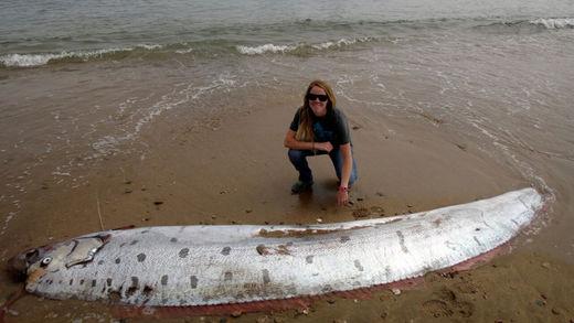 Un 'monstruoso' pez remo de 5 metros aparece en la costa de una isla de California