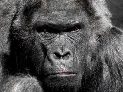 En su historia, la Tierra ha sido azotada por cinco extinciones masivas desatadas por causas naturales o cósmicas: La sexta extinción ya está aquí