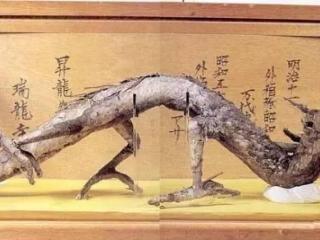 14927603316431423430187 - ¿Existieron los dragones? En China tienen EVIDENCIAS definitivas.
