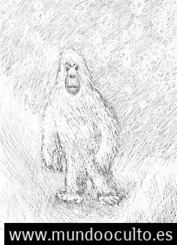 La leyenda del Yeti: evidencias y avistamientos