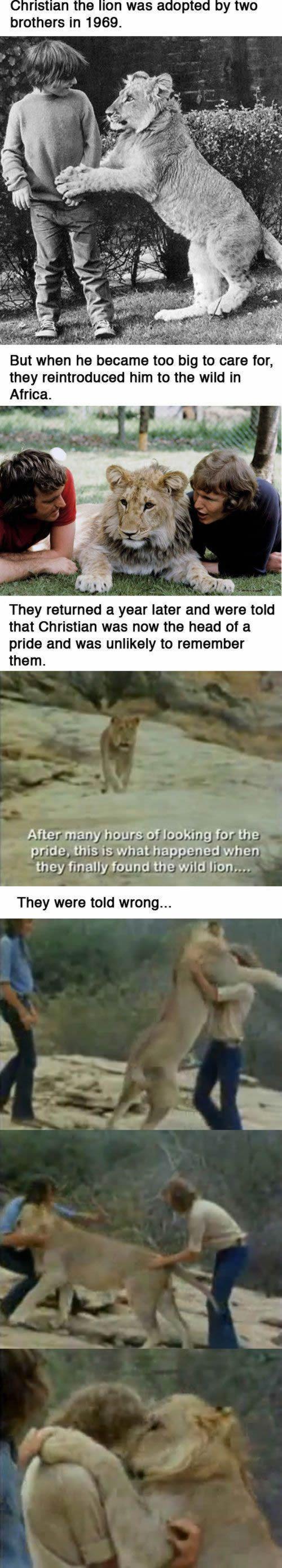 Christian, el león