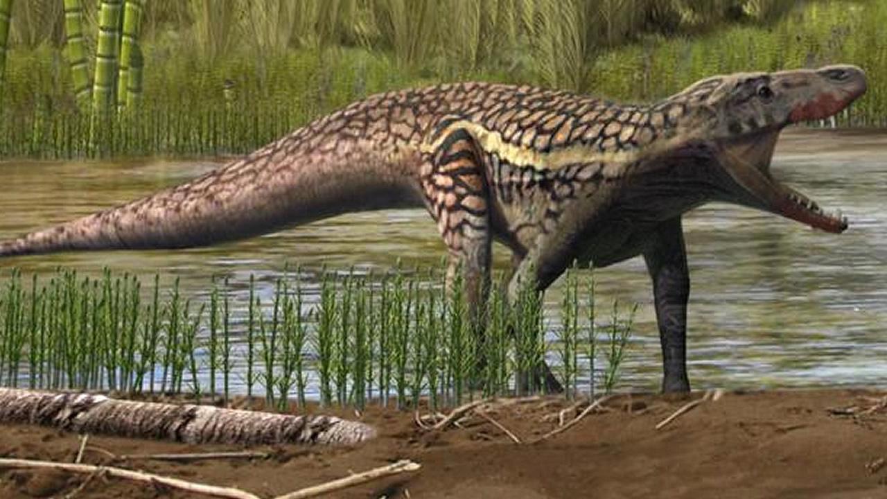 antecesor dinosaurios - Investigadores descubren una especie desconocida de reptil y antecesora de los dinosaurios