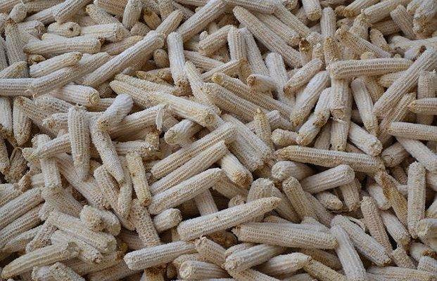 El nuevo maíz y soja transgénicos que Monsanto busca aprobar en Europa