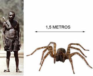 """Spider Crab - Conoce a """"J'ba fofi """": la ARAÑA GIGANTE de 1.5m que ATERRORIZA a los PIGMEOS"""