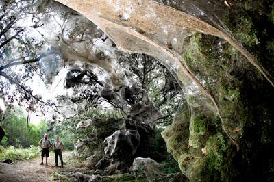 Resultado de imagen de Las misteriosas arañas gigantes del Congo: J'ba Fofi