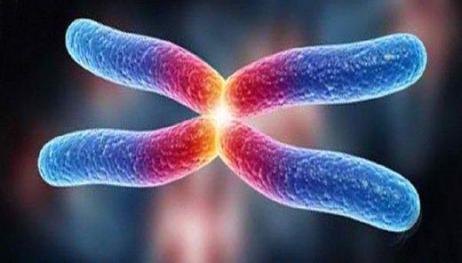 Telómeros: qué son y cómo alargarlos para vivir más