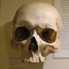 Homo sapiens: perdido en el limbo científico