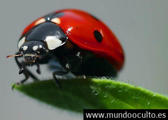 Un reciente Estudio descubre que los insectos pueden tener conciencia propia
