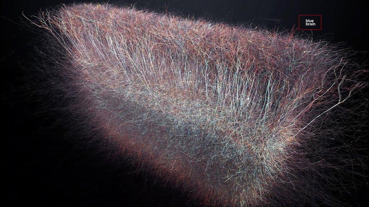Se descubre un universo de hasta 11 dimensiones en las redes cerebrales