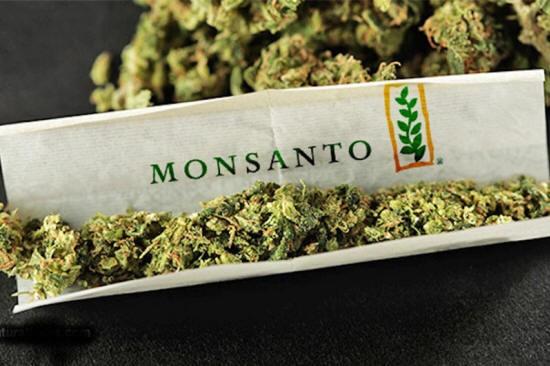 Monsanto y Bayer. Quieren hacerse con la industria del Cannabis?