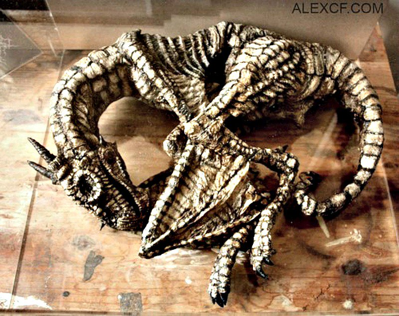 Esqueleto dragon alado - Un peculiar museo que expone especies negadas por la ciencia
