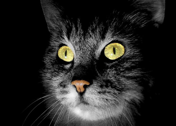 ¿Los gatos pueden ver fantasmas?