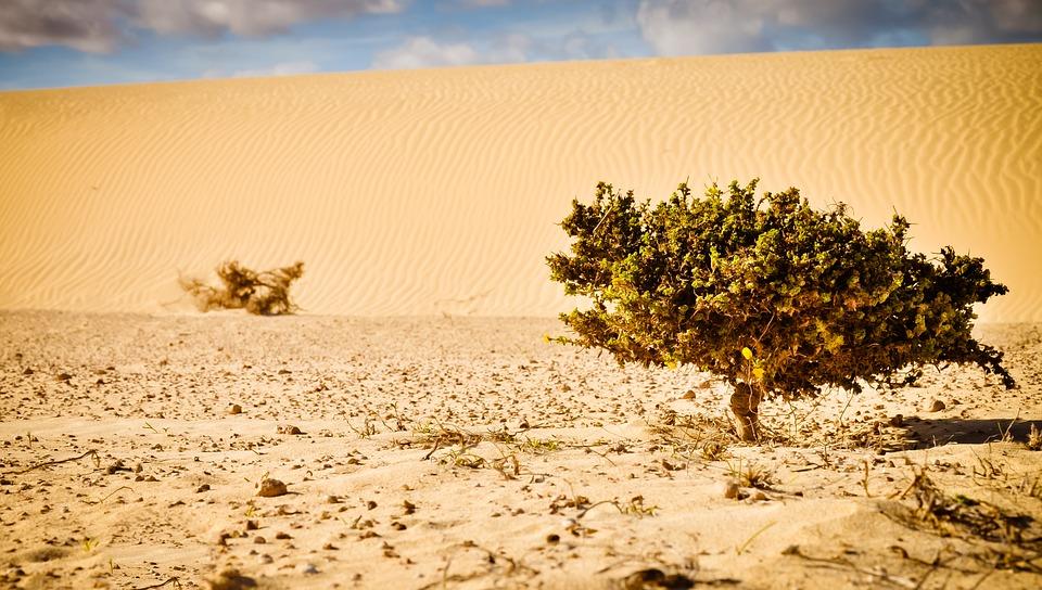 Empresas internacionales compran tierras deserticas en Africa
