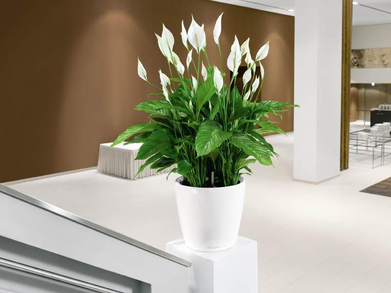 Plantas que necesita en su casa para protegerse de las energías negativas