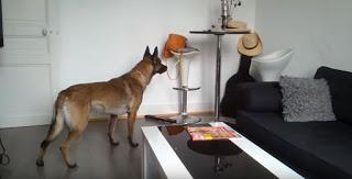 ¿Cómo saber si tus mascotas sienten la presencia de una entidad desconocida?