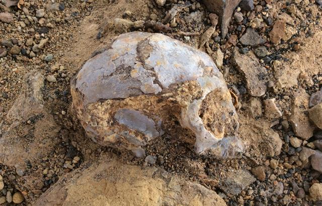 Descubren un cráneo de 13 millones de años relacionado a los humanos