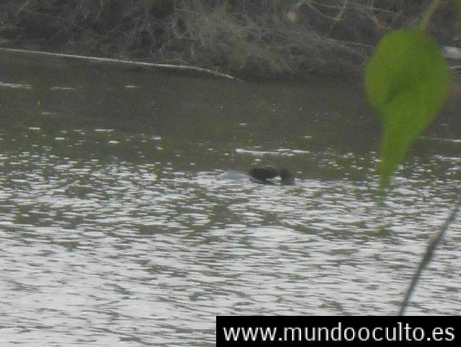 La Verdad Del Monstruo Fotografiado En Un Rió En Sinaloa