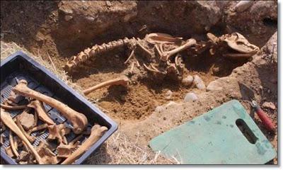 Espectacular esqueleto de perro gigante encontrado en Inglaterra