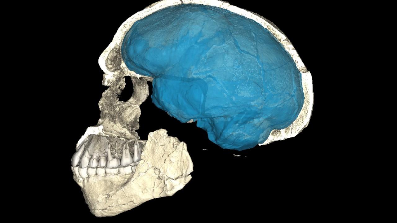 ¡Hemos estado viviendo una mentira! Fósiles de 300.000 años de antigüedad, reescribirán la historia humana.