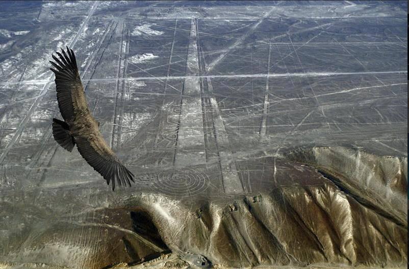 Las Líneas de Palpa: Creadas mil años antes que las Líneas de Nasca