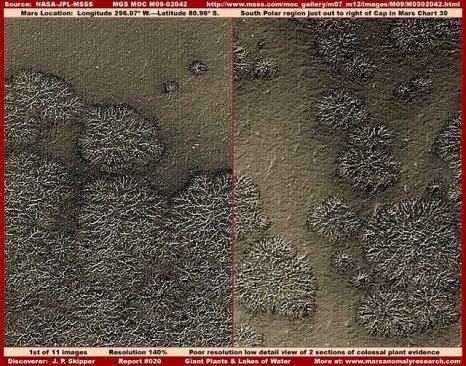 """Vegetación en: """"El polo sur de Marte""""."""