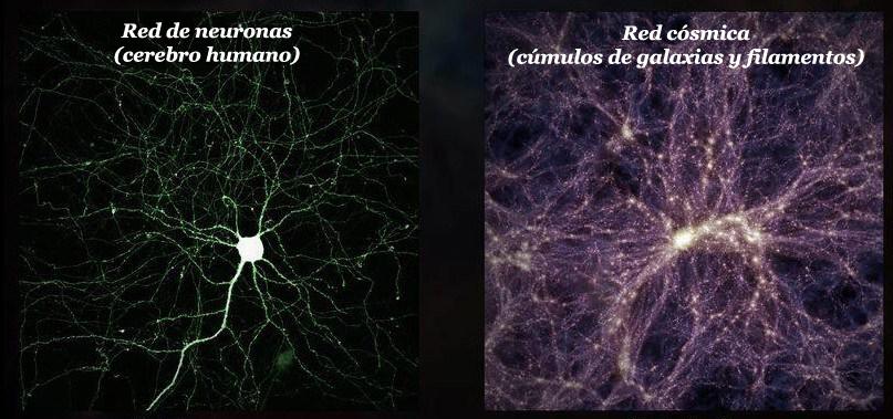 El universo crece como un cerebro gigante
