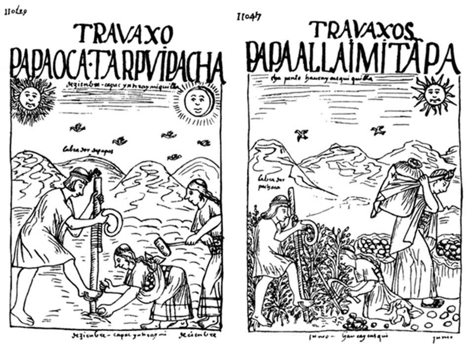 Siembra y recoleccion patatas incas 1 - Inti, el dios del Sol de los incas: hijo de Viracocha y antepasado de los primeros reyes del Imperio inca