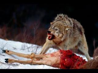 Los lobos vampiros de Irlanda.
