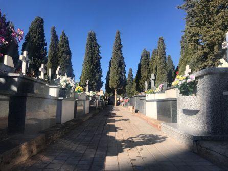 Cipreses del Cementerio de Alcázar de San Juan